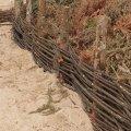 Installation des fascines contre l'érosion des  Dunes
