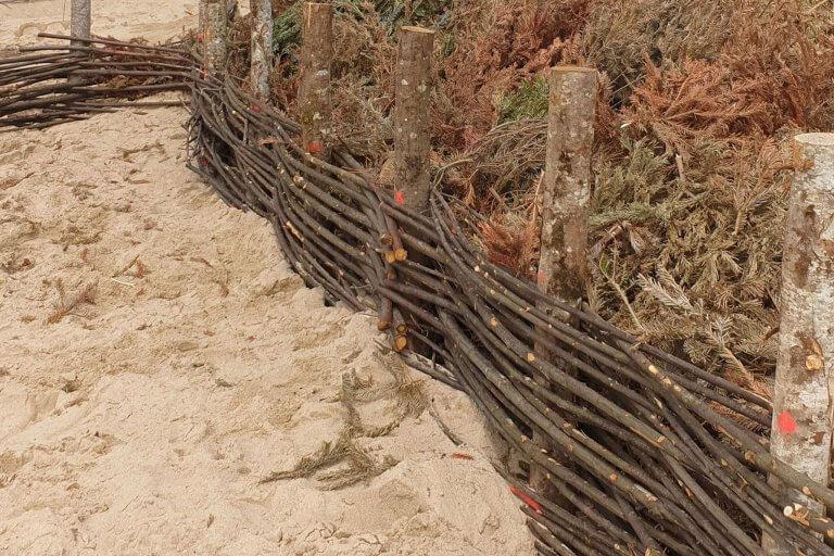 Fascines installées au pied des dunes de Gouville-sur-Mer pour éviter l'érosion